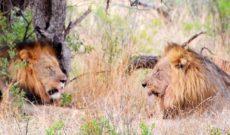 WAVEJourney's South African Safari at Madikwe Safari Lodge
