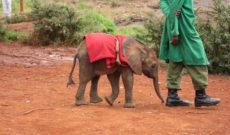 Notes from Africa: Visiting an Elephant Orphanage in Kenya