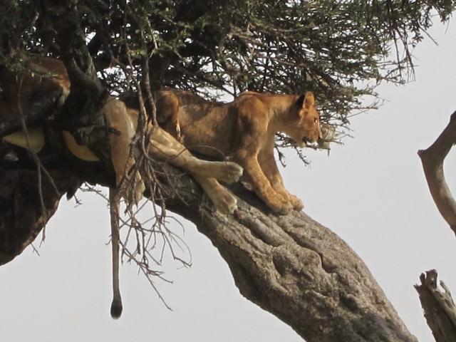 On Safari with andBeyond