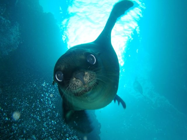 Swim with Sea Lions ©La Paz Tourism