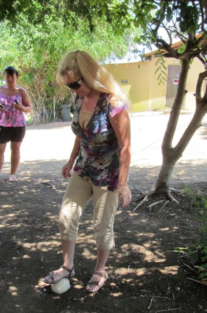 Patti Morrow Testing the Strength of Ostrich Eggs
