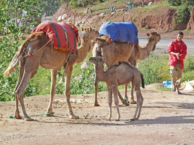 Insight Vacations Review – Treasures of Spain, Portugal & Morocco – Marrakesh & Ourika Valley