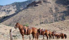 Horseback Riding Vacation at Twin Peaks Ranch, Idaho, USA