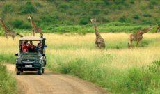 Travel Deals: African Travel, Inc.'s Great Zimbabwe Adventure