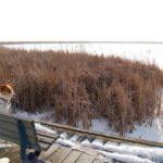 Travel Ontario, Canada: A Winter Visit To Point Pelee
