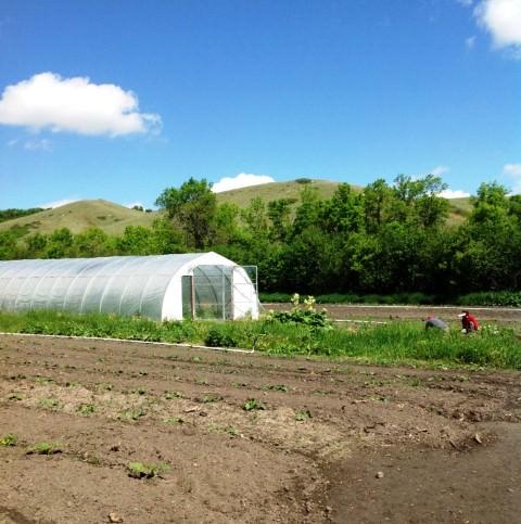 Heliotrope Organic Farm in Regina, Saskatchewan