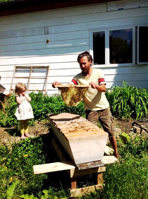 Honeycombs at Heliotrope Organic Farm in Regina, Saskatchewan.