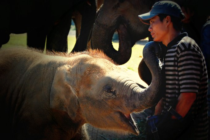 Baby Elephant with Mahout