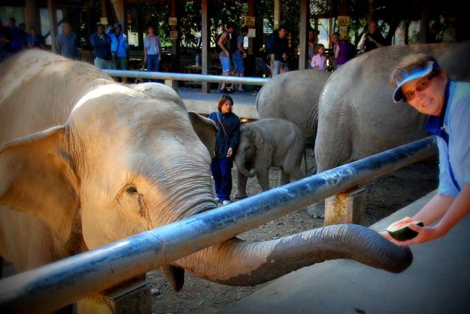 Jill feeding an elephant