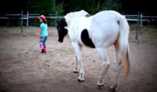 Horse Riding and Horse Whispering at The Hills Health Ranch