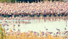 Flamingos Seen from Rovos Rail in South Africa