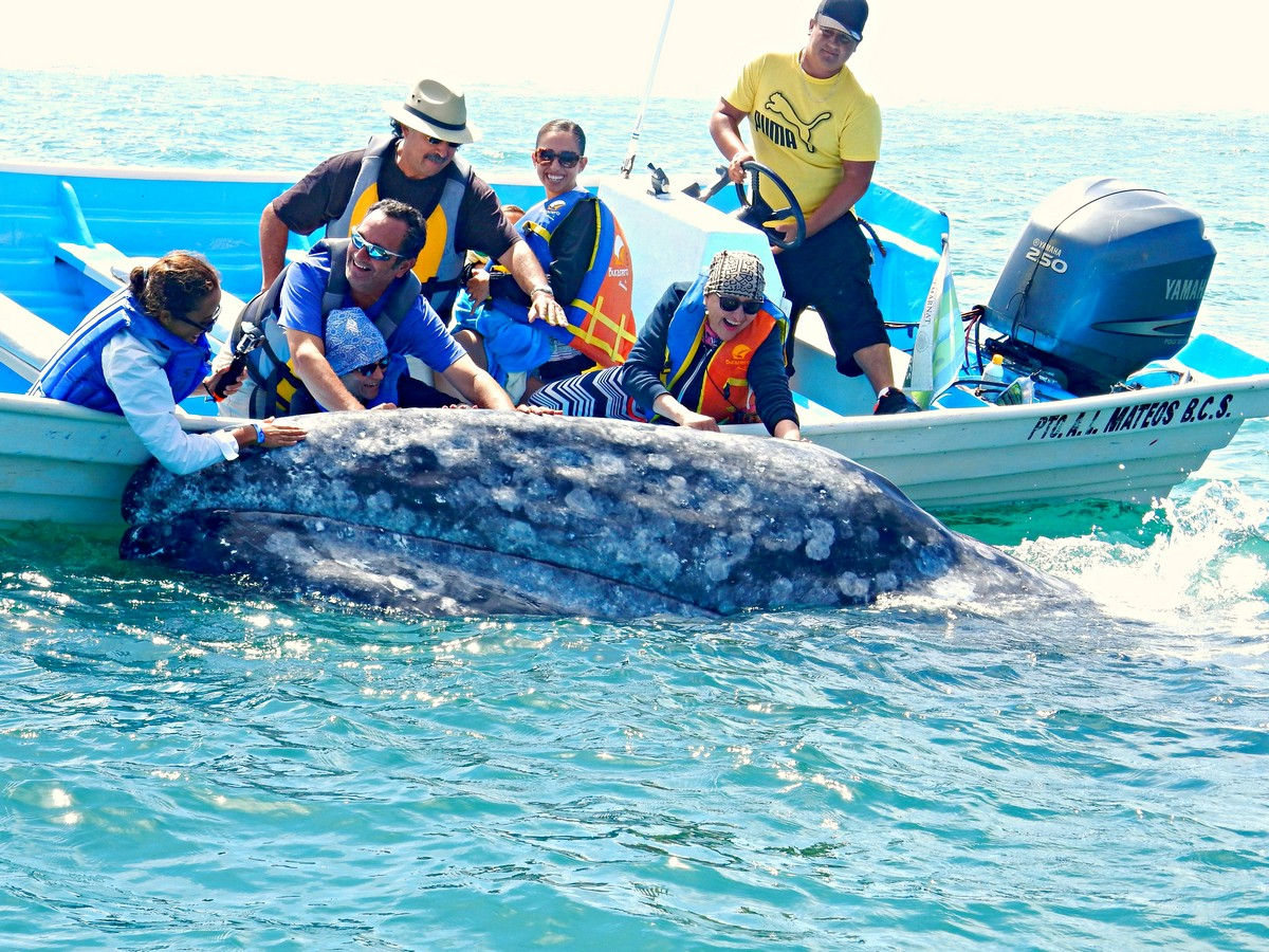 Whale Watching Excursion to See Gray Whales in Magdalena Bay