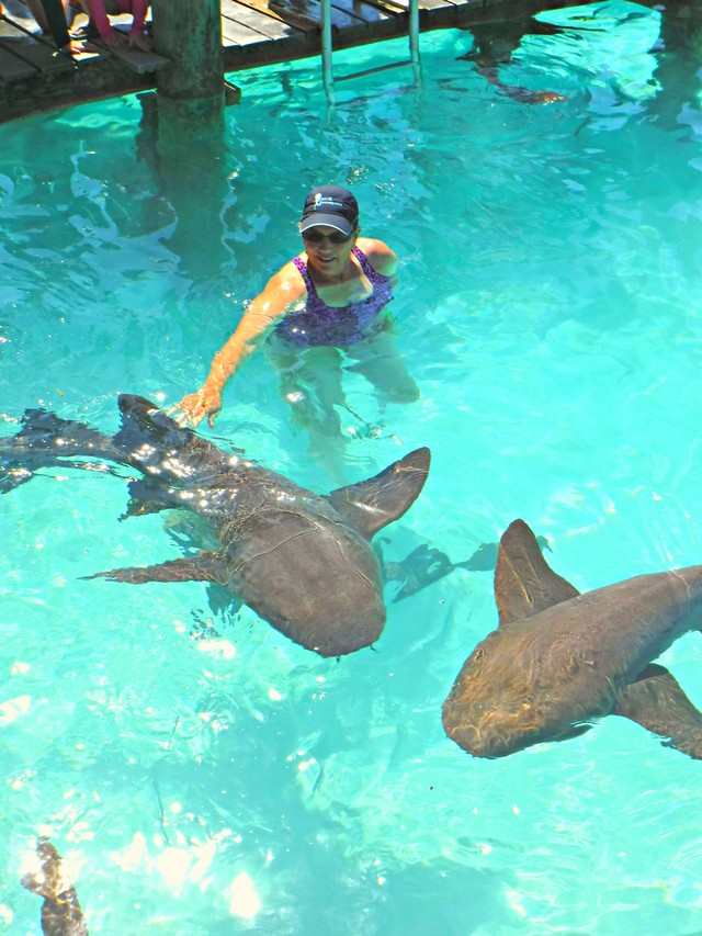 Jill Swimming with Nurse Sharks at Compass Cay in the Bahamas