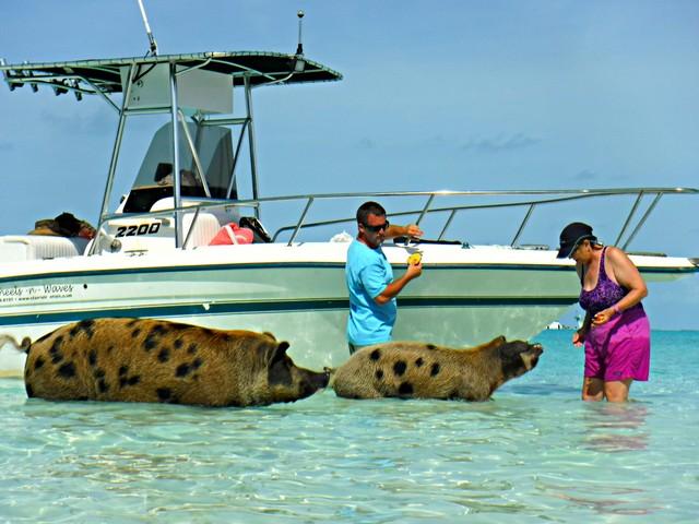 Jill Takes a Piggy Tour in the Bahamas