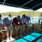 Glass Bottom Boat Tour in The Bahamas
