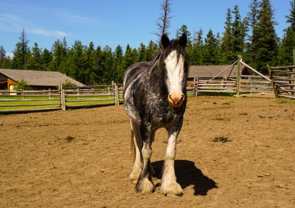 Echo Valley Lodge - Friendly Horses Make For Happy Guests