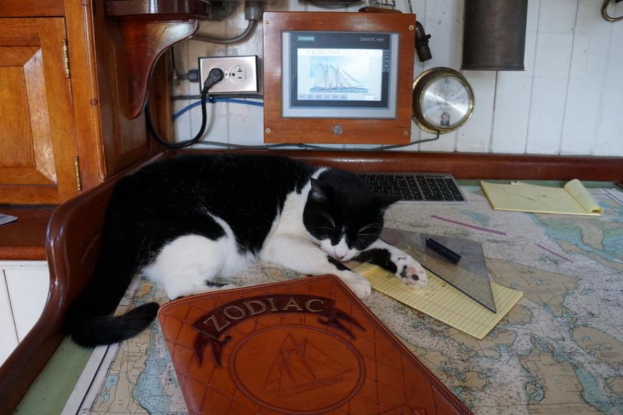 Abbey the Schooner Zodiac Cat