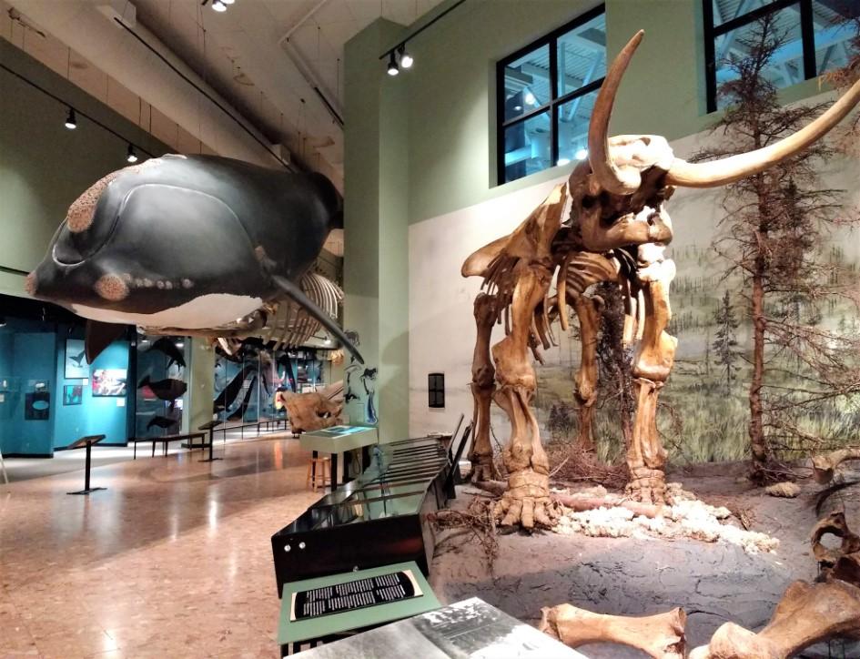 New Brunswick Museum in Saint John