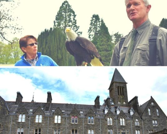Birds of Pray and Falconry Excursion